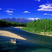 Middle Fork Flathead River, Flathead River Fly Fishing